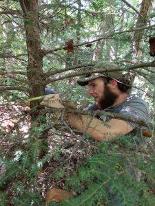measuring-a-small-tree