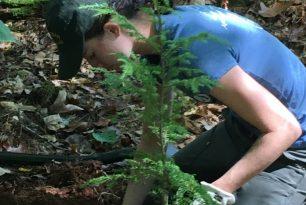 Forest Restoration Alliance Volunteer Workday