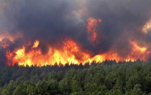 forest-fire-wallpaper