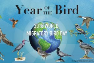 Saturday, May 12th, 2018: Celebrate World Migratory Bird Day in Sylva