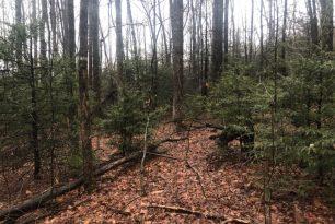 Friday, May 3, 2019: Hemlock hike with Conserving Carolina
