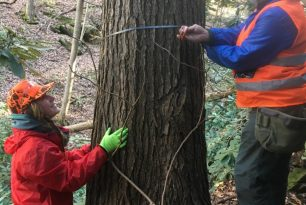"Saturday, October 17, 2020: NC Arboretum Field Experience ""Protecting Your Hemlocks"""