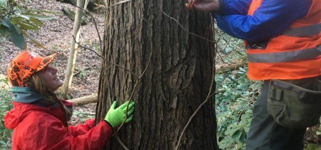 "Wednesday, November 18, 2020: NC Arboretum Field Experience ""Protecting Your Hemlocks"""