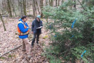 Western Carolina University studies biocontrol beetles