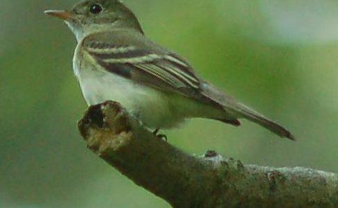 Tuesday, September 17th, 2019: HRI presents to High Country Audubon Society