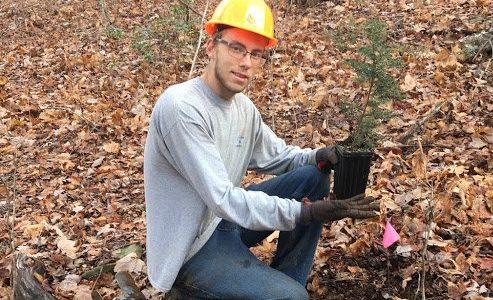 Transplanting Hemlock Seedlings — Advice From a Local Nursery Owner