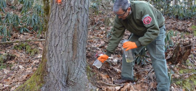 NC Forest Service Employees Receive Award for Hemlock Protection