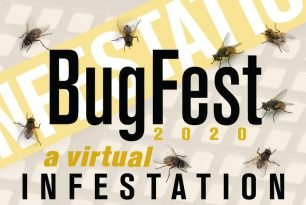 Friday, September 18, 2020: HWA Presentation at BugFest: A Virtual Infestation