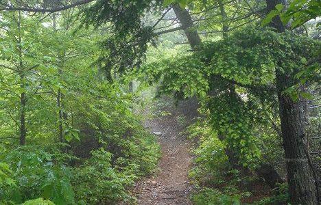 Saturday, November 21, 2020: Kitsuma Peak Hike-and-Bike in Pisgah National Forest