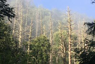 HRI Partners Support Work to Slow Spread of Hemlock Woolly Adelgid in Tennessee